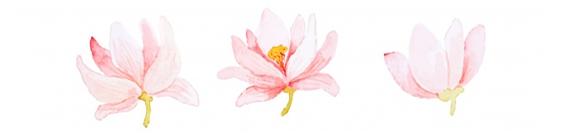 flowerdivider